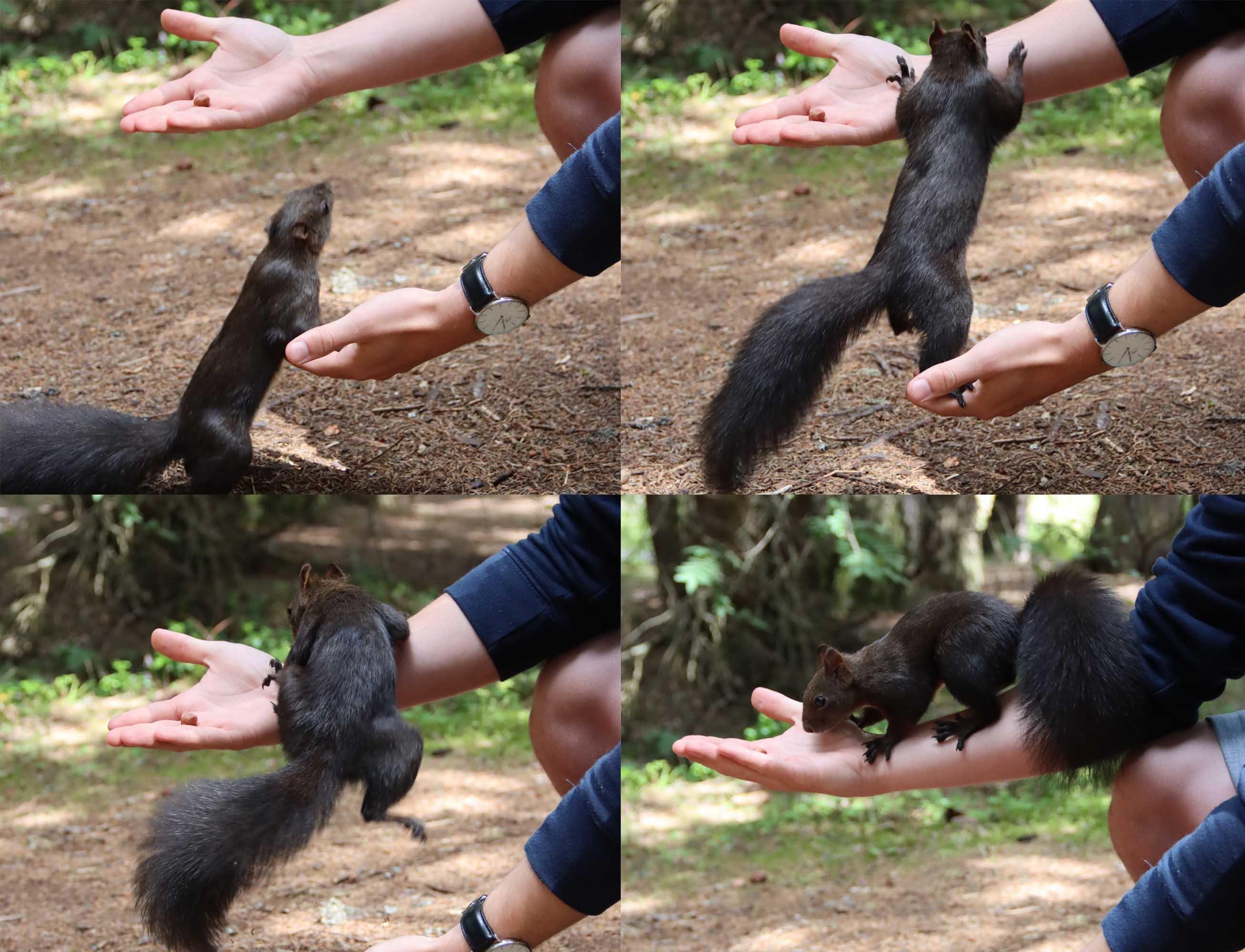 squirrel_discover_graubuenden_lenzerheide