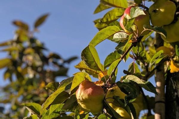 Besuch der Obstplantage auf dem Plantahof durch Hotelmanagement Studierende der Culinary Arts